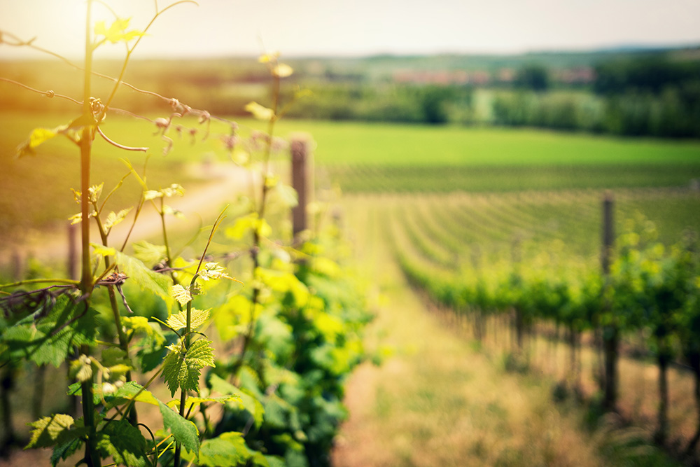winery industry solutions